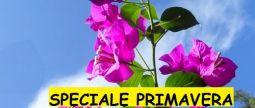 OFFERTA DI PRIMAVERA DECKING