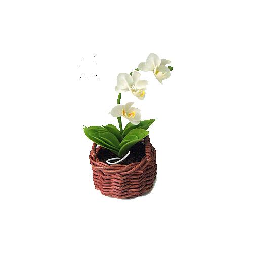 Orchidea Collection