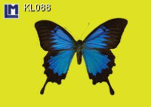 KL088
