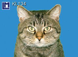 KL134