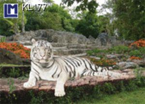 KL177