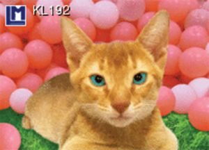 KL192
