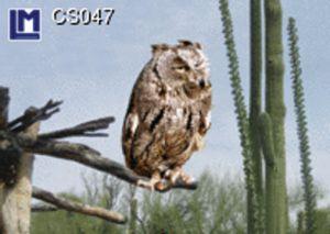 CS047