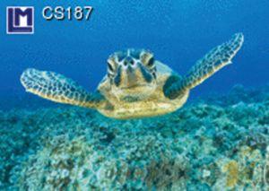 CS187