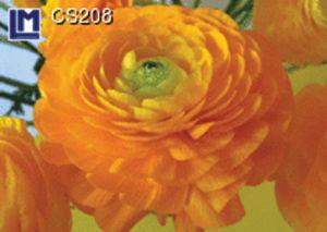 CS208