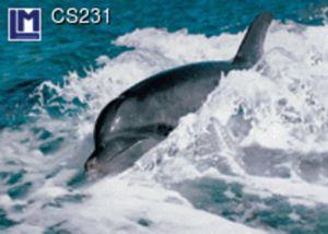 CS231
