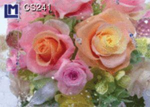 CS241