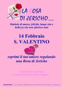 Cartello A4 Rosa di Jericho San Valentino