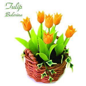 Tulipano Ballerina