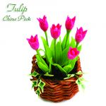 Tulipano China Pink