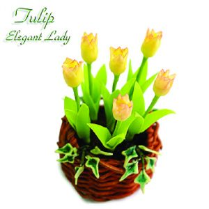 Tulipano Elegant Lady