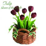 Tulipano Queen of the Night