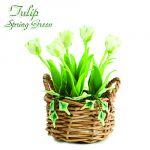 Tulipano Spring Green