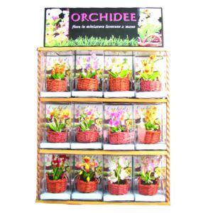 Espositore 24 Orchidee in miniatura