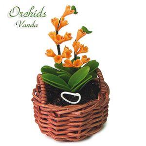 Orchidea Wanda Gialla