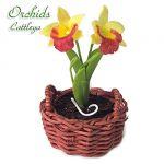 Orchidea Cattleya Gialla