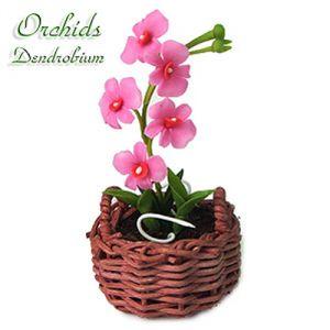 Orchidea Dendrobium Rossa
