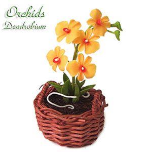 Orchidea Dendrobium Gialla