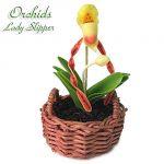 Orchidea Lady Slipper