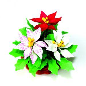 Stella di Natale rossa, bianca e bianca/rossa