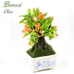Bonsai Ulivo (Lepre)