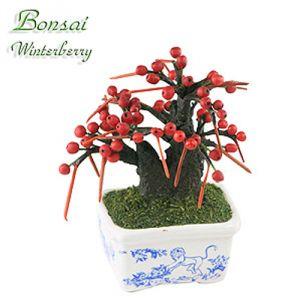 Bonsai Winterberry (Scimmia)
