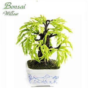 Bonsai Salice (Cane)
