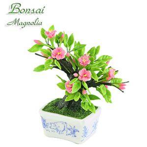Bonsai Magnolia (Cinghiale)