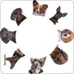 Pannello 10 x 10 cm, cani.