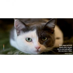 Pannello 10 x 20 cm, gatto 1.