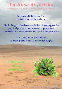 Cartello A4 Rosa di Jericho