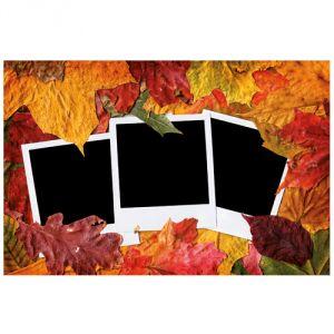 Pannello 20 x 30 cm, foto su foglie.
