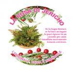 La Rosa di Jericho, confezione in pvc - versione natalizia