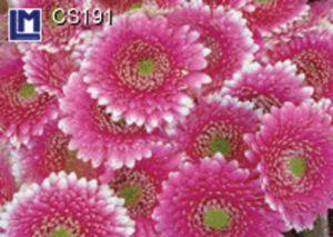 CS191